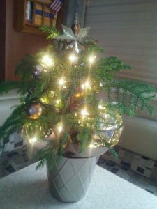 Our mini tree
