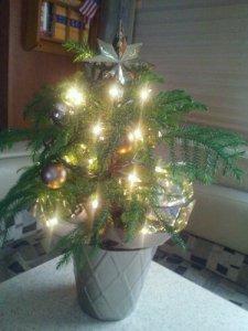 Our mini tree