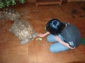 Austin petting a tortoise