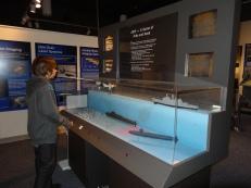 Interactive sonar