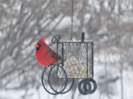 Snowblown