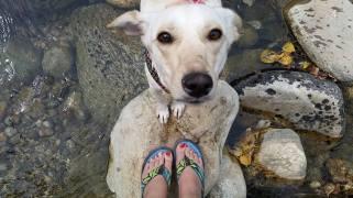 My dog Lilikoi and I enjoying a cool river, Lamoille Canyon, Ruby Mountains, Nevada